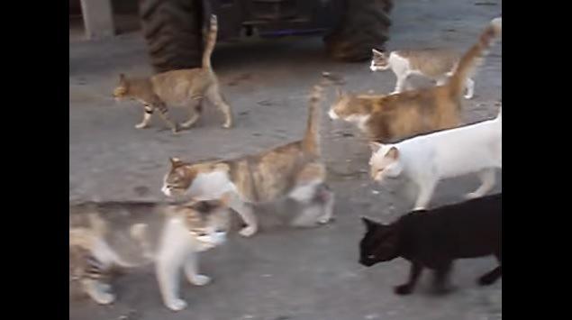 左方向に歩く猫達(手前にこちらを向く猫)