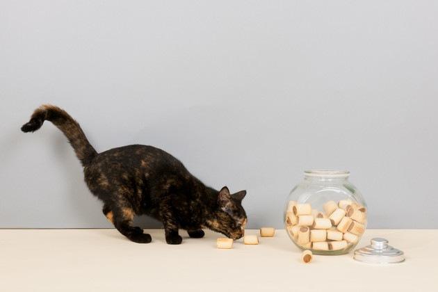 クッキーを食べる猫