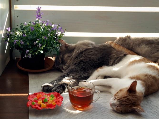 カップのお茶と隣で眠る猫2匹