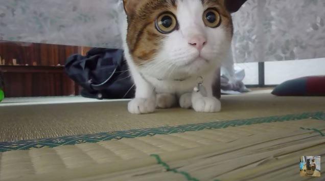 向かって右を見つめる猫