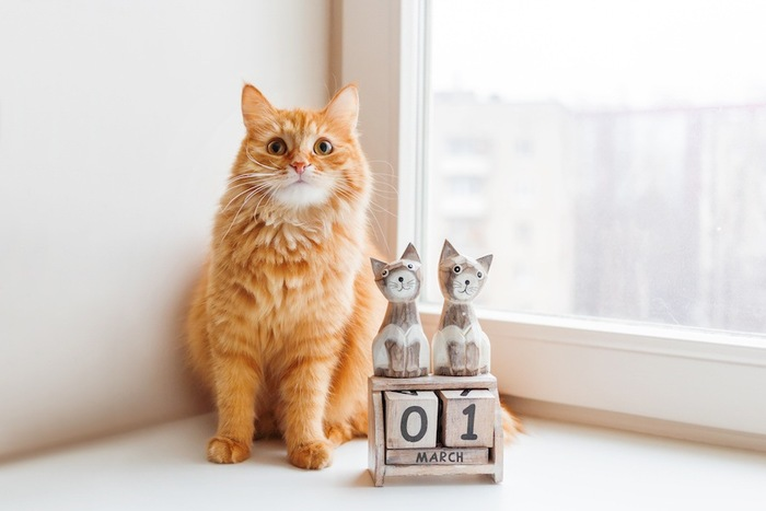 日付の書かれた置物の横で座る猫