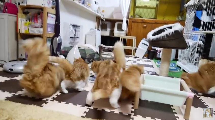 部屋の奥に向かい猛ダッシュする猫たち