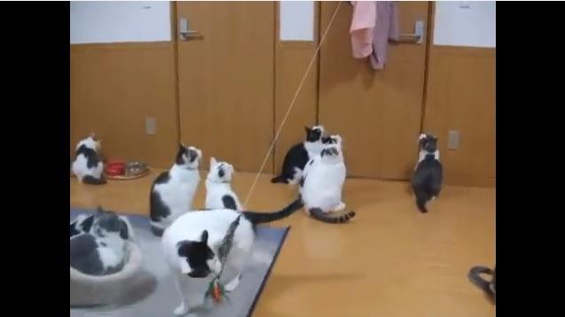 猫じゃらしを大きく引っ張る猫
