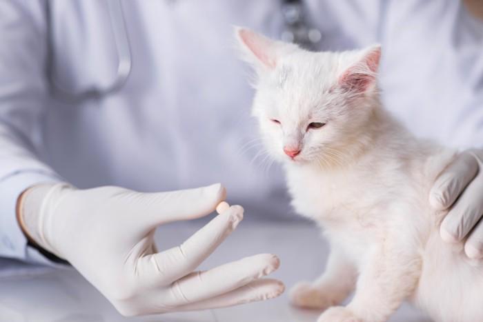 薬を嫌がる子猫