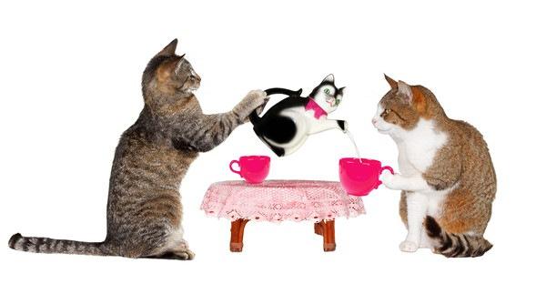猫二匹が猫ポットを使う
