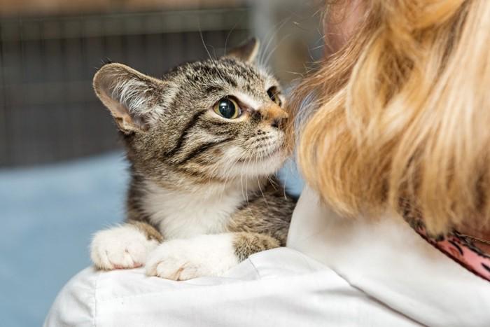 女性に抱っこされる子猫