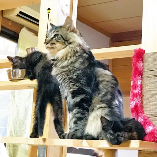 タワーにいる猫の写真