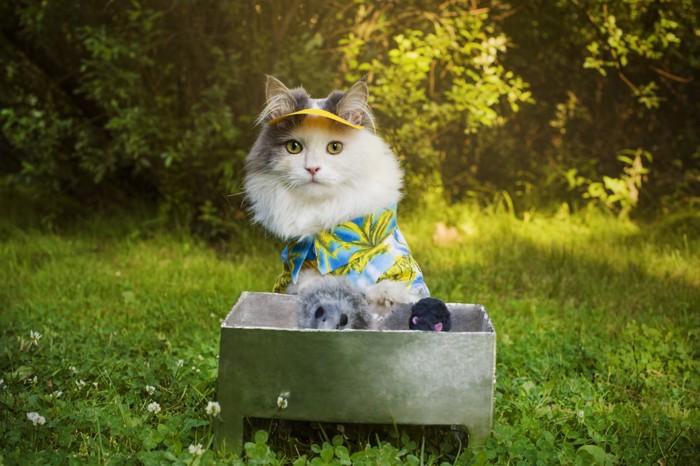 キャンプする猫