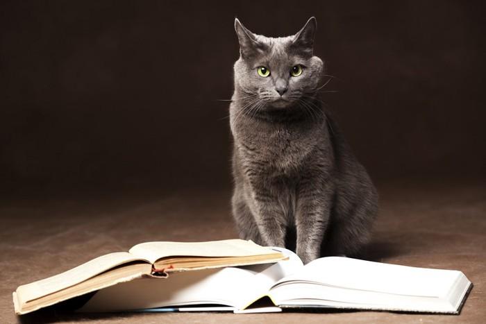 本の後ろに座る黒猫