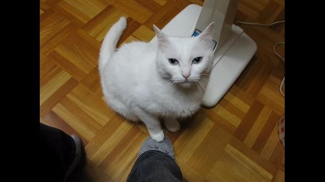 カメラ目線で足を踏み返す猫