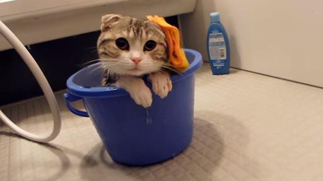 猫の頭から落ちるタオル