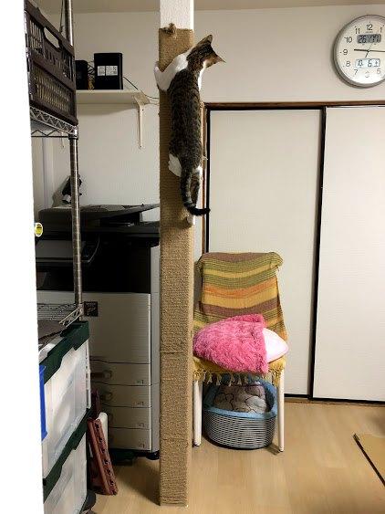 柱に上る猫全体