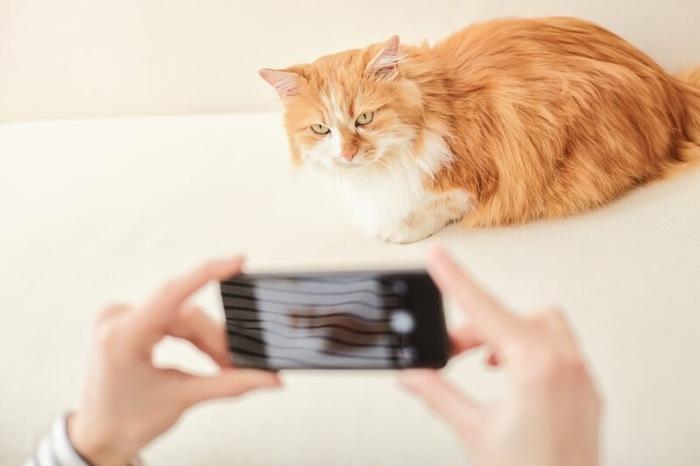 フラッシュ無しで猫を撮影するイメージ