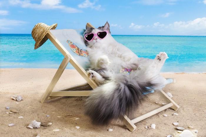 ビーチでくつろぐ猫