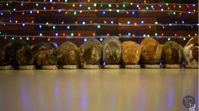 横一列に並ぶ猫達