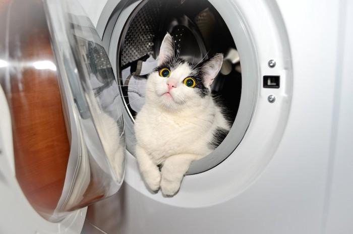 洗濯機の中に入った猫