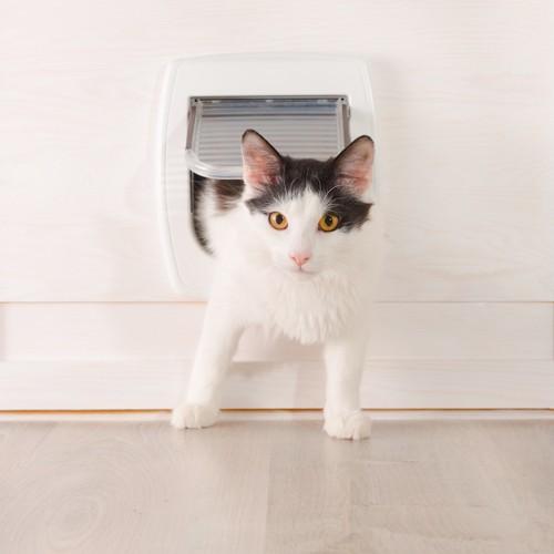猫用ドアから顔を覗かせる猫