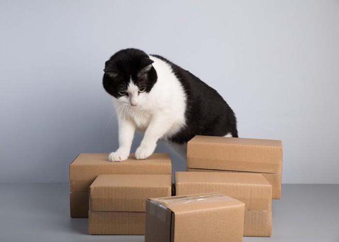 複数のダンボール箱とその上に乗ろうとしてる猫