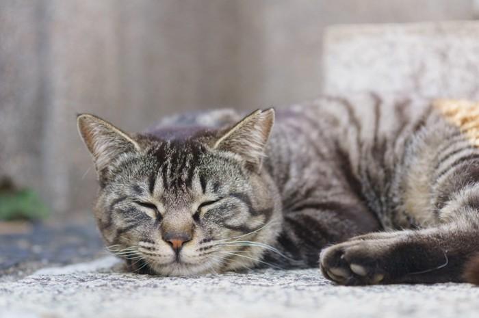 眠る猫の写真