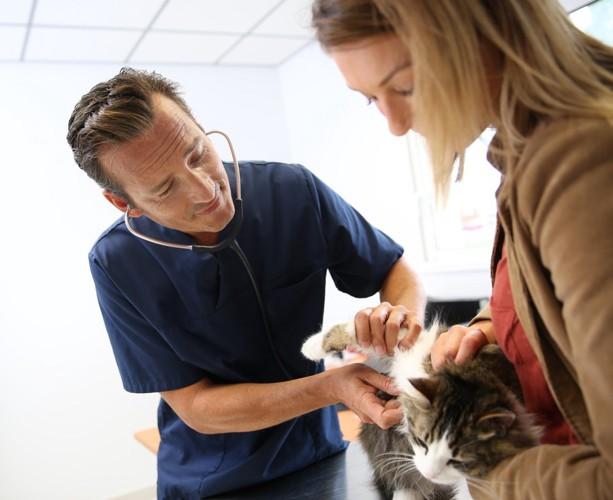 病院内で男性医師による猫の診察と飼い主の女性