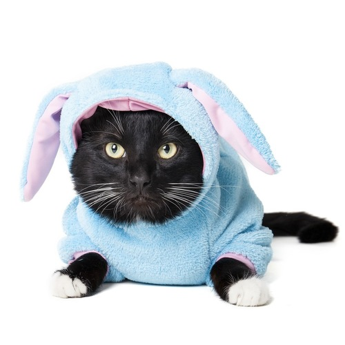 ウサギのコスプレをする猫