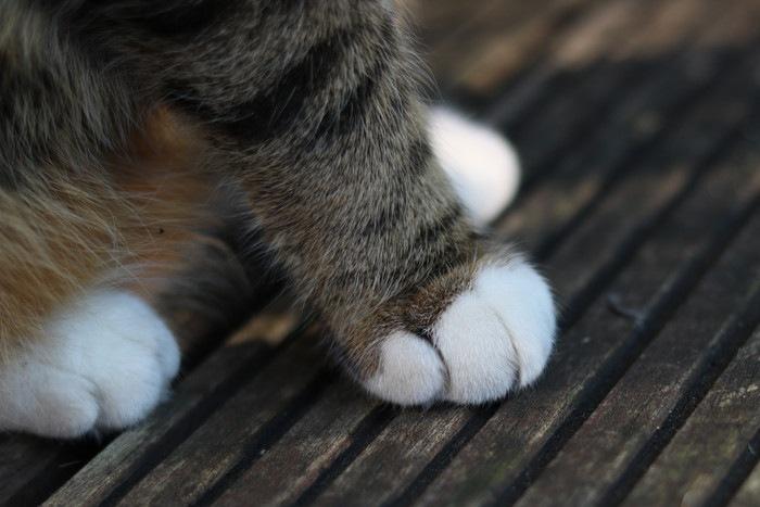 指先だけ白い猫の手