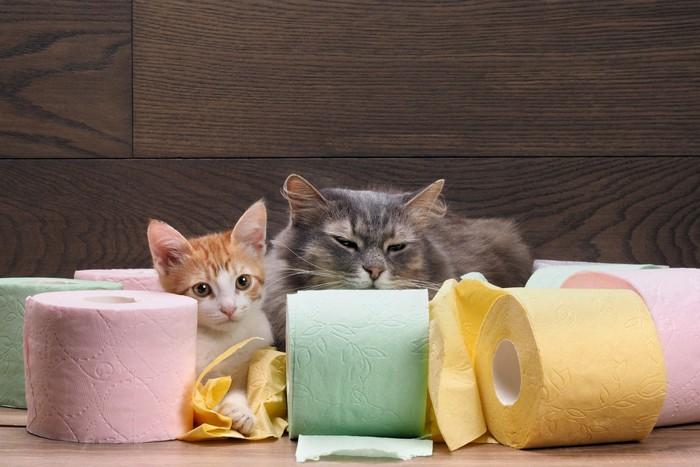 トイレットペーパーに囲まれる猫