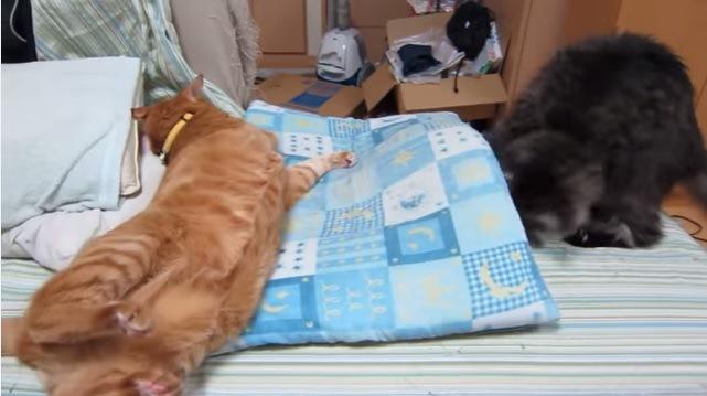 横たわる猫と座布団から顔を抜く猫