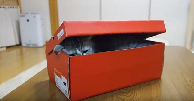 箱に沈む猫