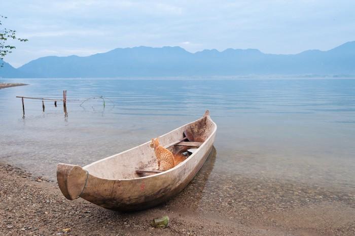 小舟に乗る猫