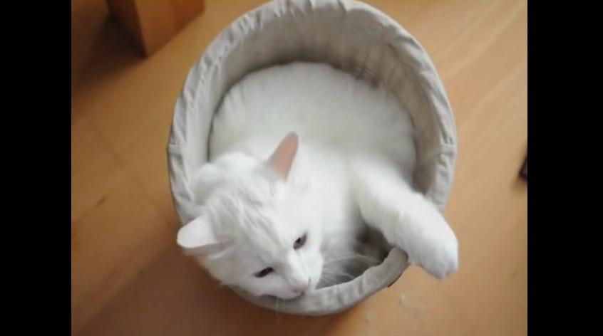 ごみ箱に手をかけ顎を乗せる猫