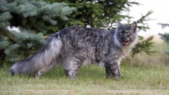 まだら模様の猫