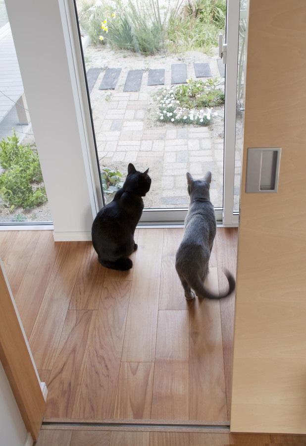 玄関に向かう猫