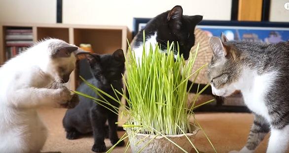 草で遊び始まる子猫