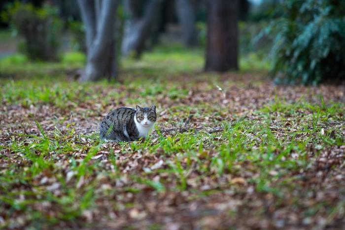 草むらに佇む野良猫