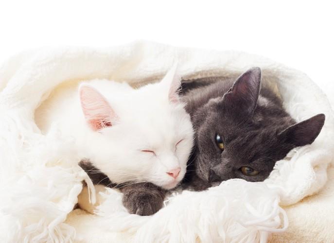 一緒に眠る白猫黒猫