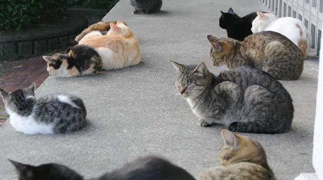 たくさんの猫(みんな寝ている)