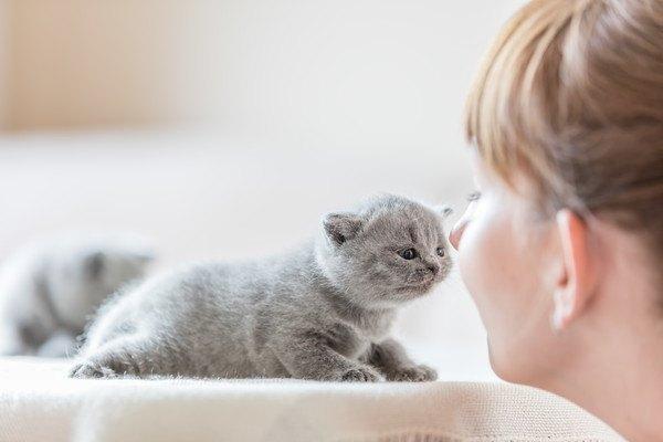 子猫に顔を近づける女の子