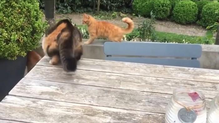 すぐ動き出す三毛猫