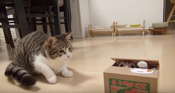 訝しげに貯金箱を見る猫