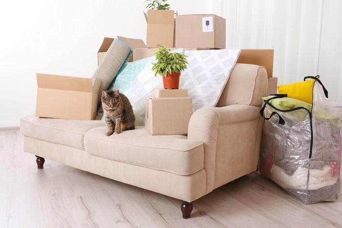 引っ越したばかりの部屋と猫