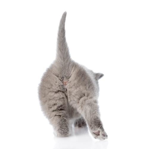 ふわふわの子猫のおしり