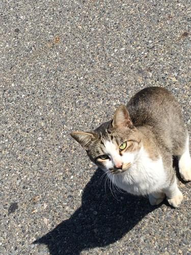 一匹の猫がカメラを向いている写真