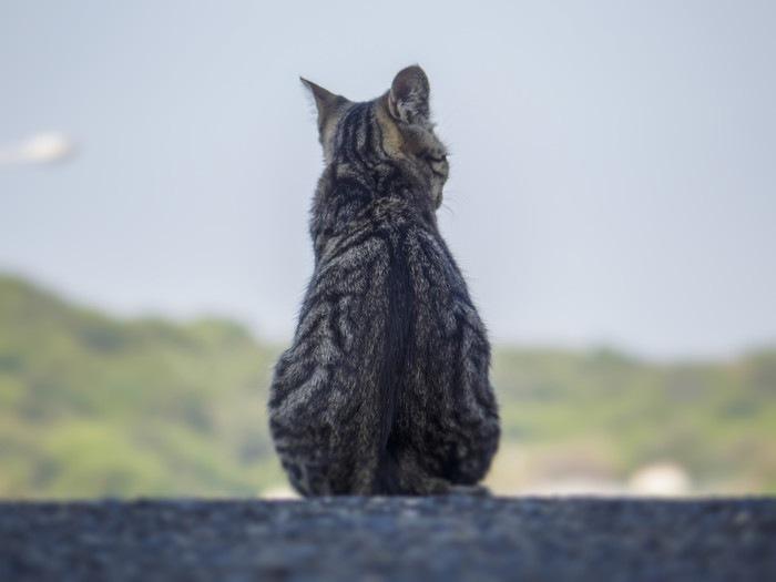 座る猫の後ろ姿の写真