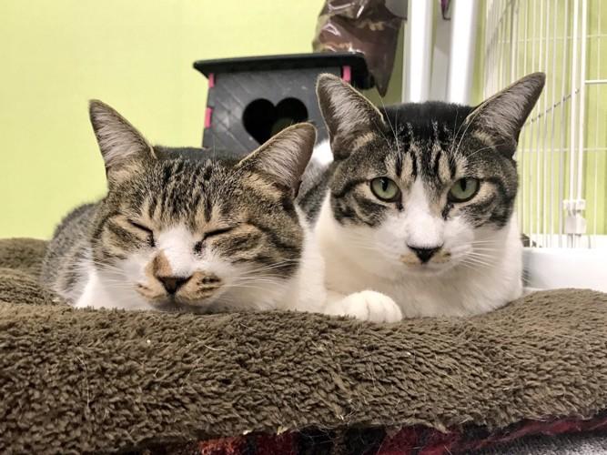 まちねこに居る2匹の猫