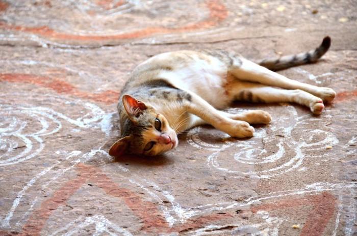 寺のコーラムに横たわるインドの猫