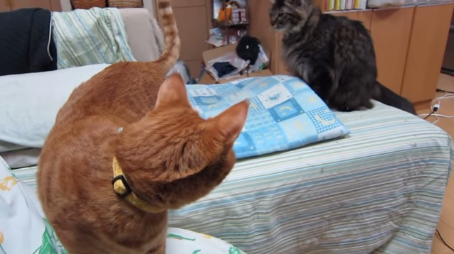 後ろを振り返る猫