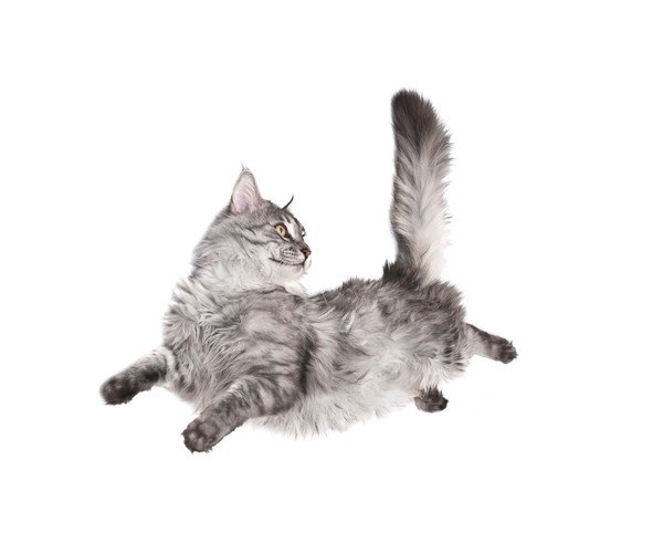 体を動かす猫