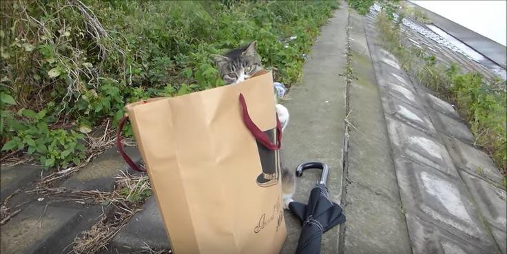 紙袋を漁る猫