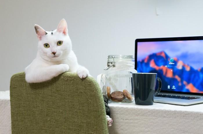 椅子に肘を置いて座る猫